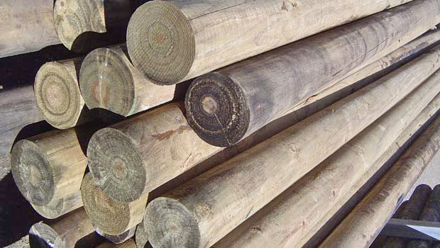 treated pine posts